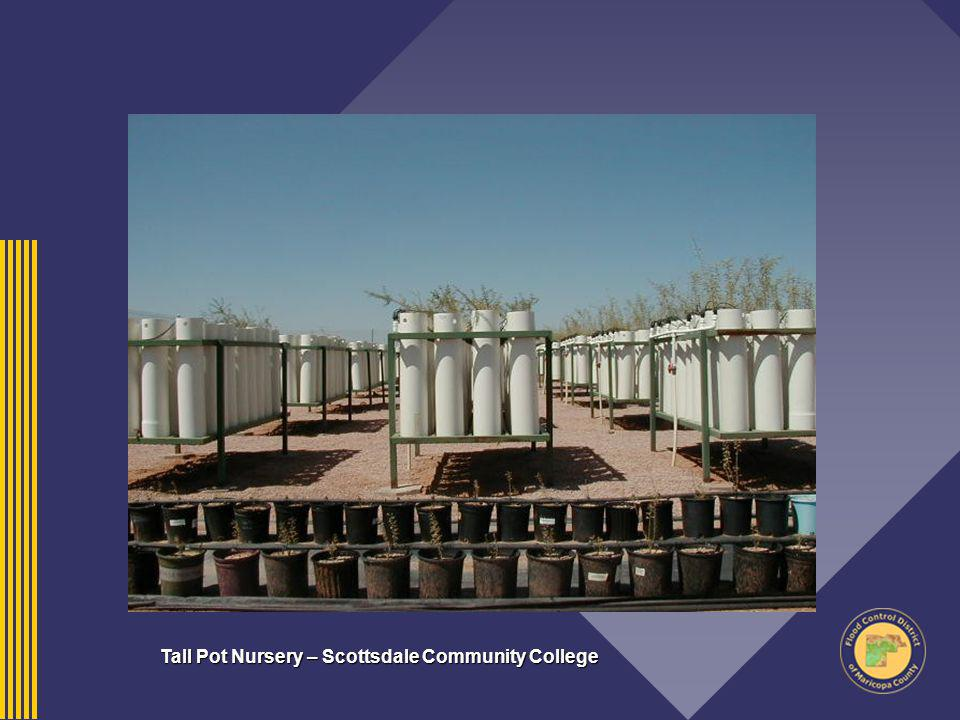 Tall Pot Nursery – Scottsdale Community College