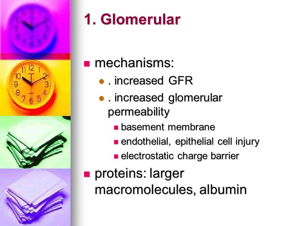 1. Glomerular mechanisms: proteins: larger macromolecules, albumin
