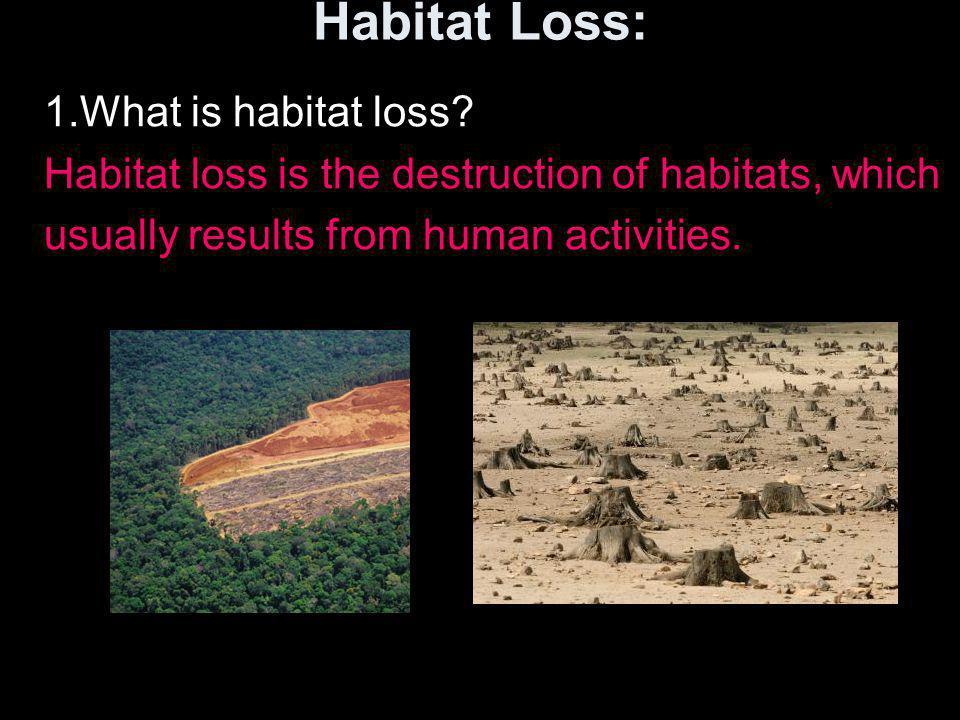 Habitat Loss: 1.What is habitat loss