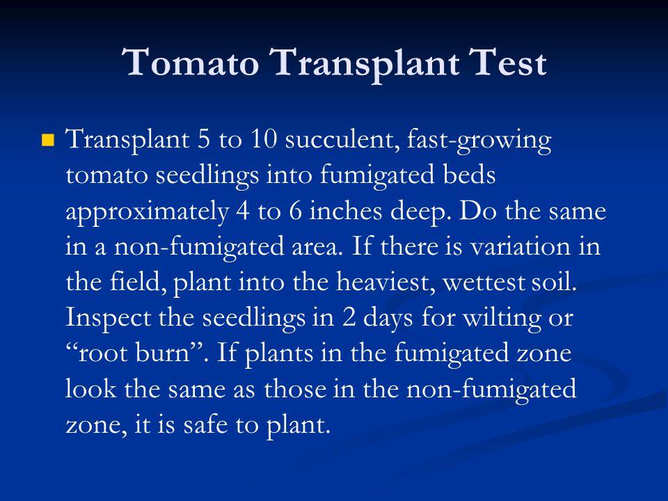 Tomato Transplant Test