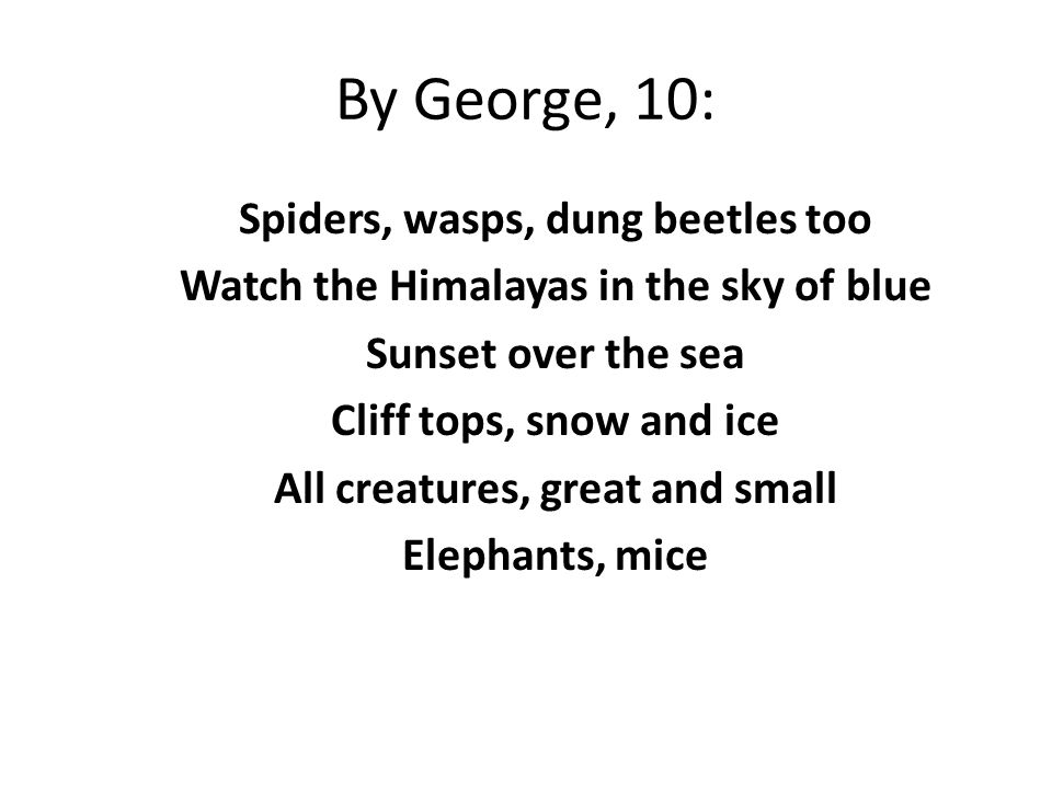 By George, 10: Spiders, wasps, dung beetles too