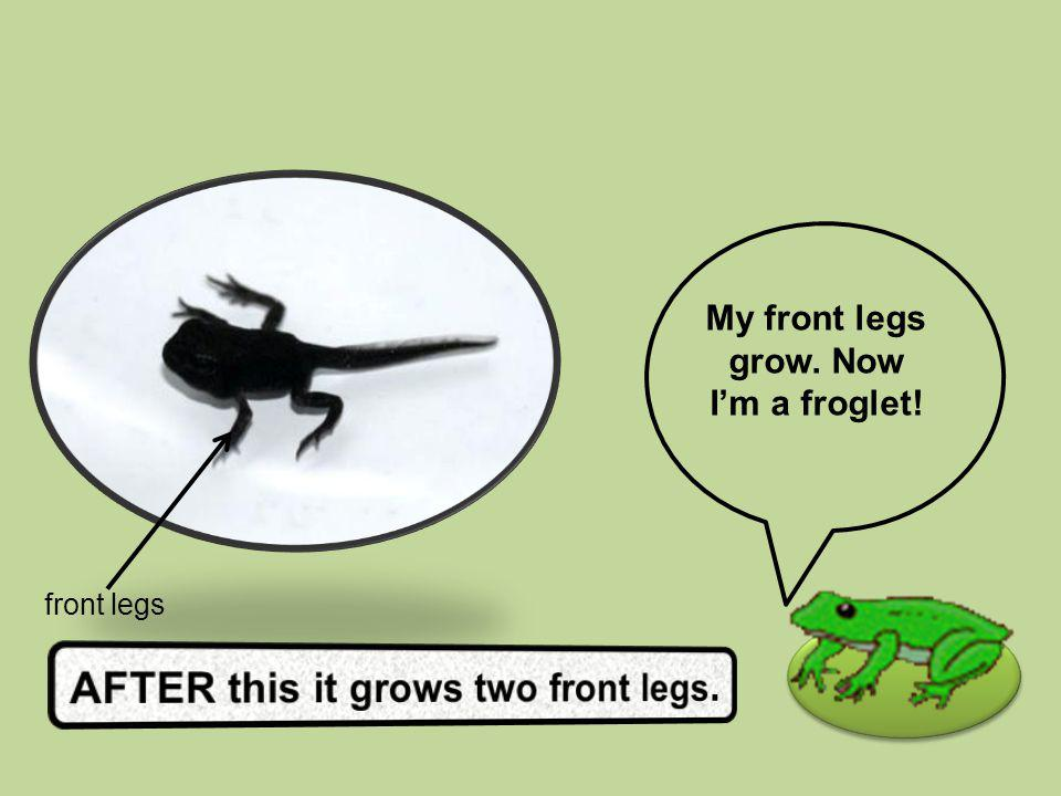 AFTER this it grows two front legs.