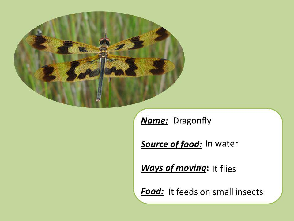Name: Source of food: Ways of moving: Food: Dragonfly In water It flies It feeds on small insects