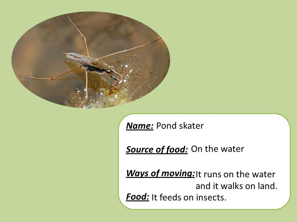 Name: Source of food: Ways of moving: Food: Pond skater. On the water. It runs on the water and it walks on land.