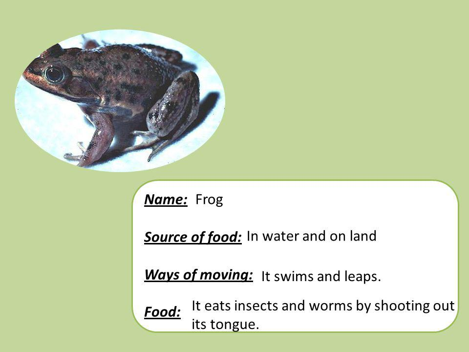 Name: Source of food: Ways of moving: Food: Frog. In water and on land. It swims and leaps. It eats insects and worms by shooting out.