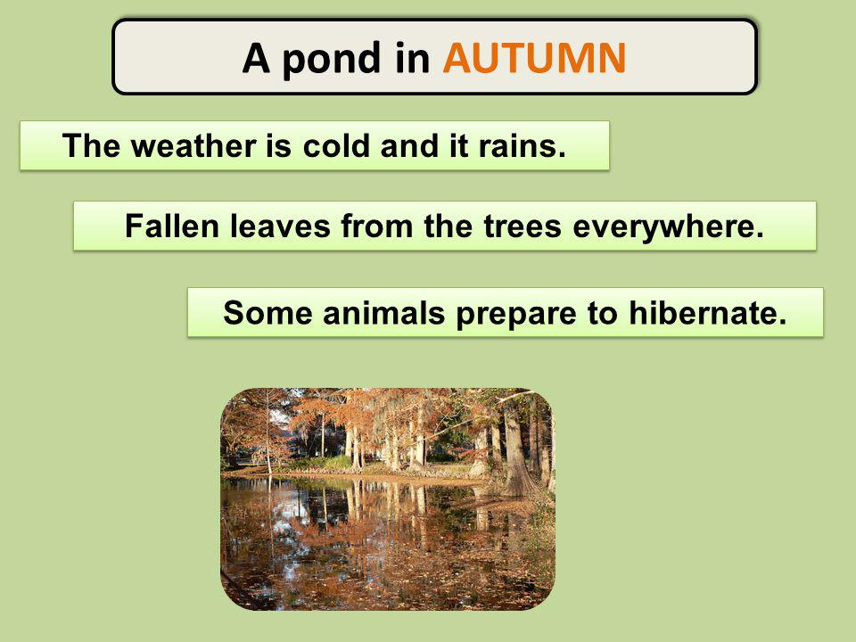A pond in AUTUMN The weather is cold and it rains.