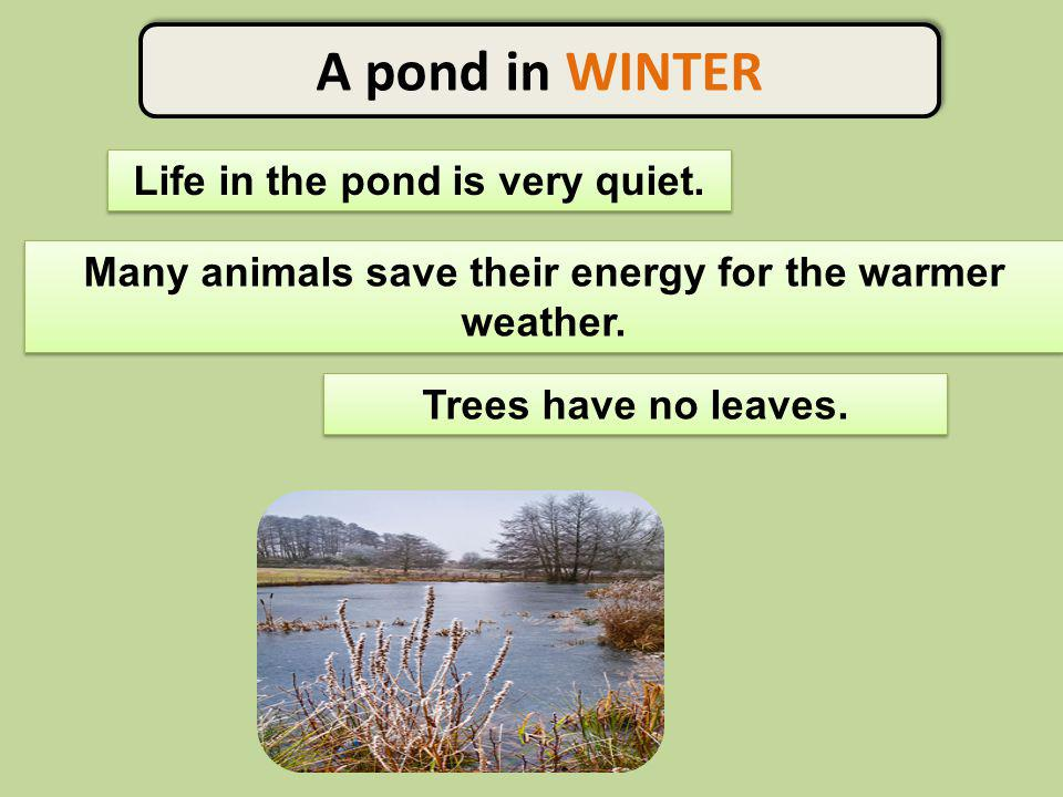A pond in WINTER Life in the pond is very quiet.