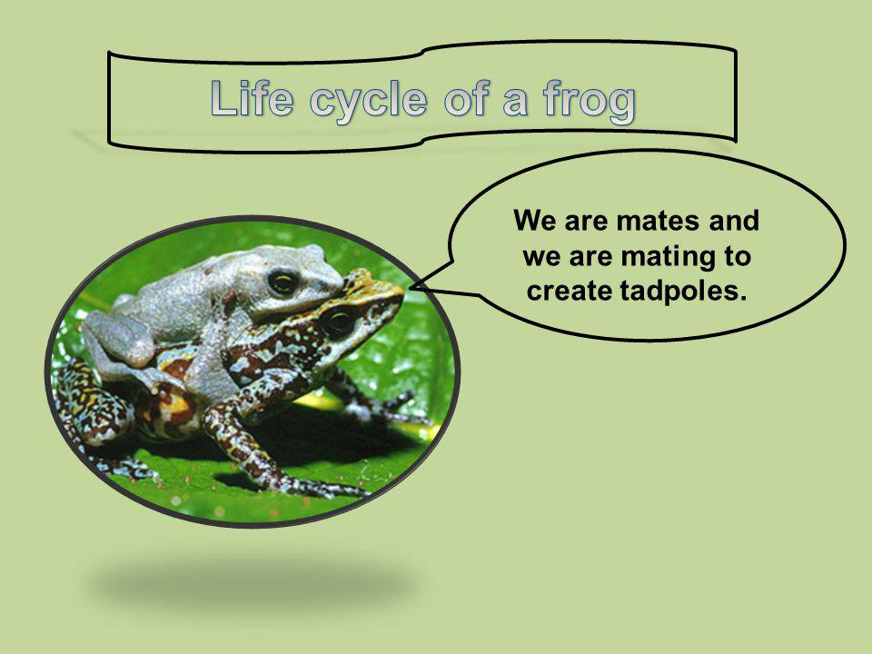 We are mates and we are mating to create tadpoles.