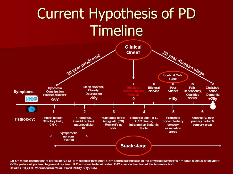 Current Hypothesis of PD Timeline