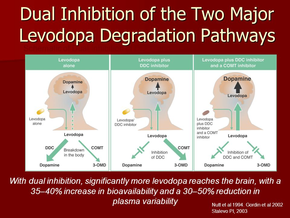 Dual Inhibition of the Two Major Levodopa Degradation Pathways