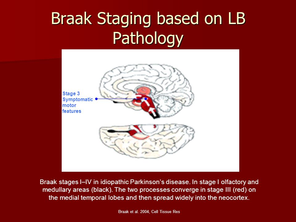 Braak Staging based on LB Pathology