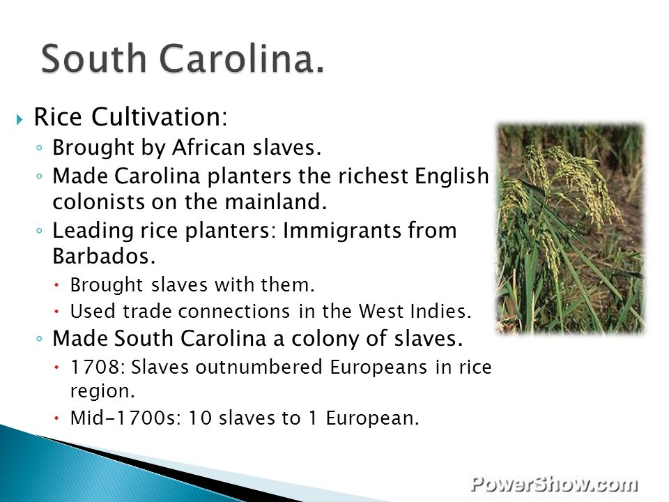 South Carolina. Rice Cultivation: Brought by African slaves.