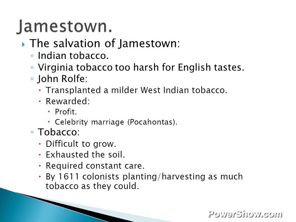 Jamestown. The salvation of Jamestown: Indian tobacco.
