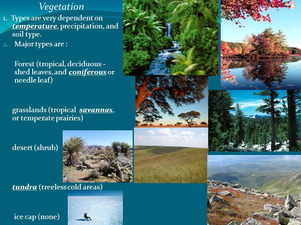 Vegetation 1. Types are very dependent on temperature, precipitation, and soil type. Major types are :
