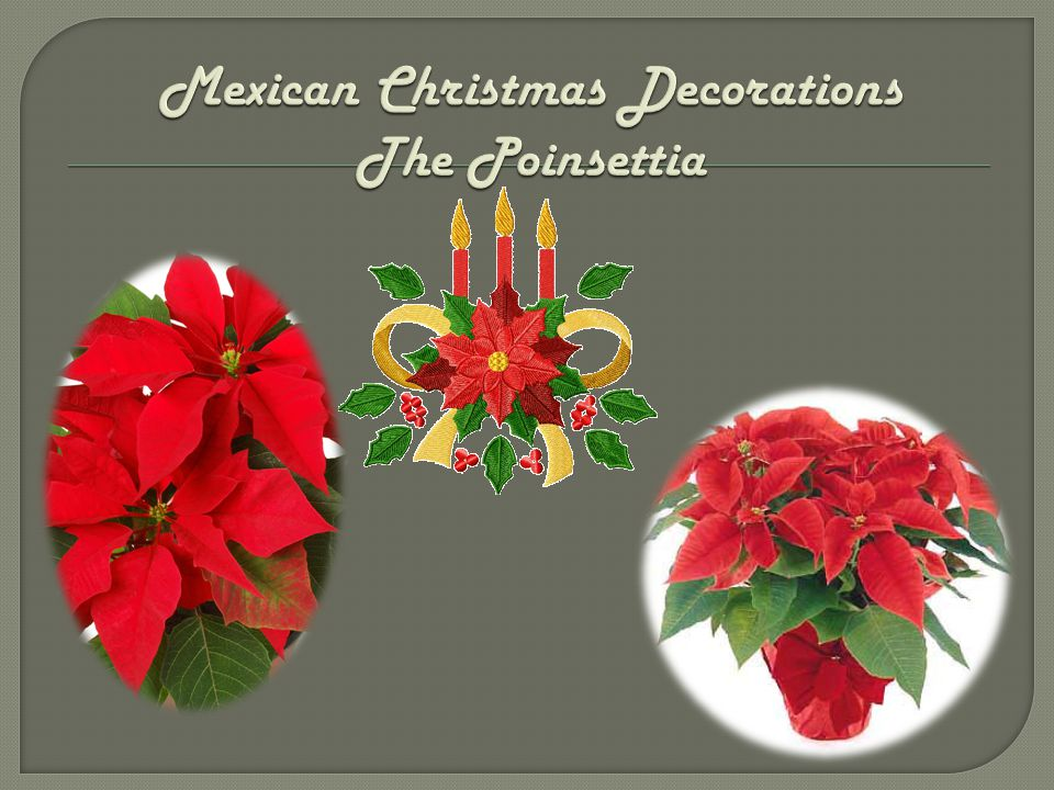 Mexican Christmas Decorations The Poinsettia