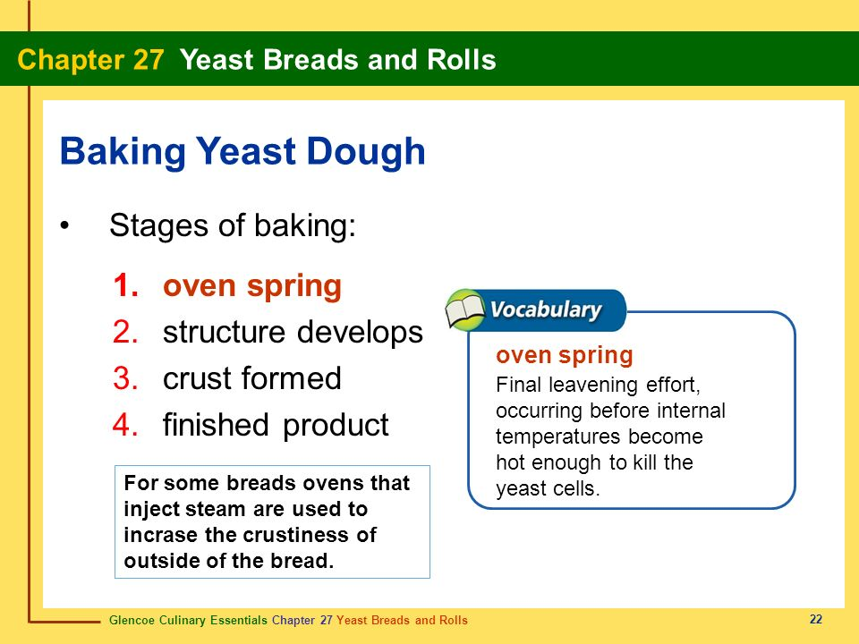 Baking Yeast Dough Stages of baking: oven spring structure develops