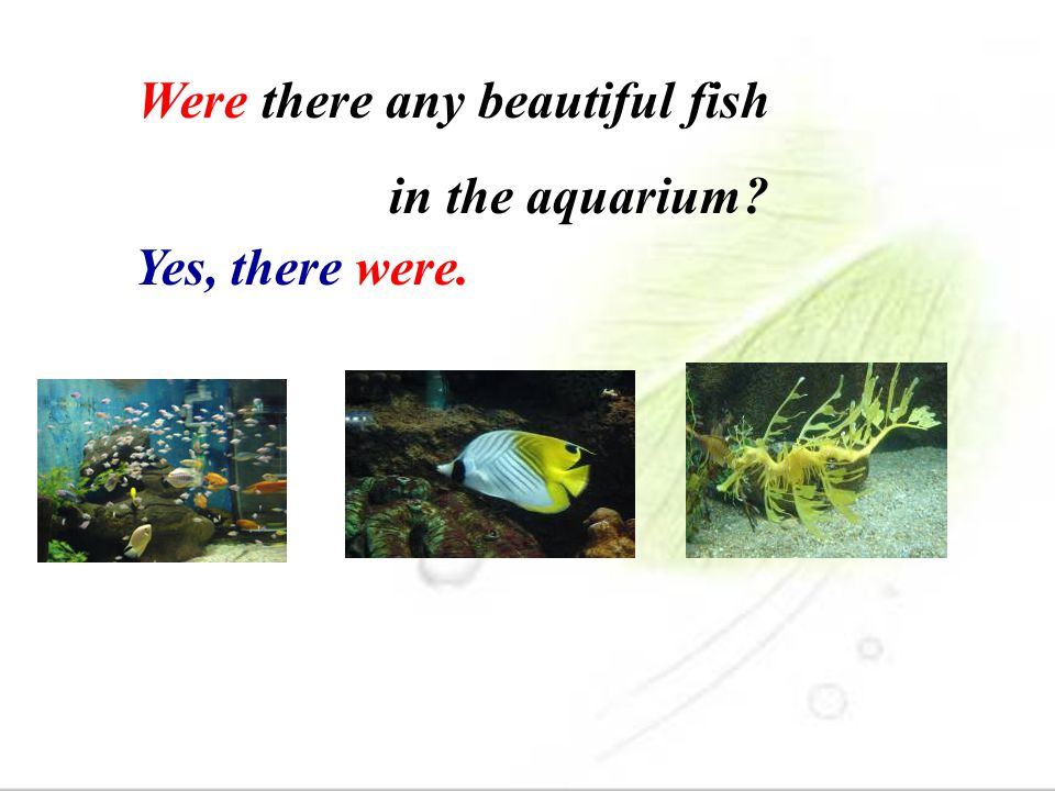 Were there any beautiful fish