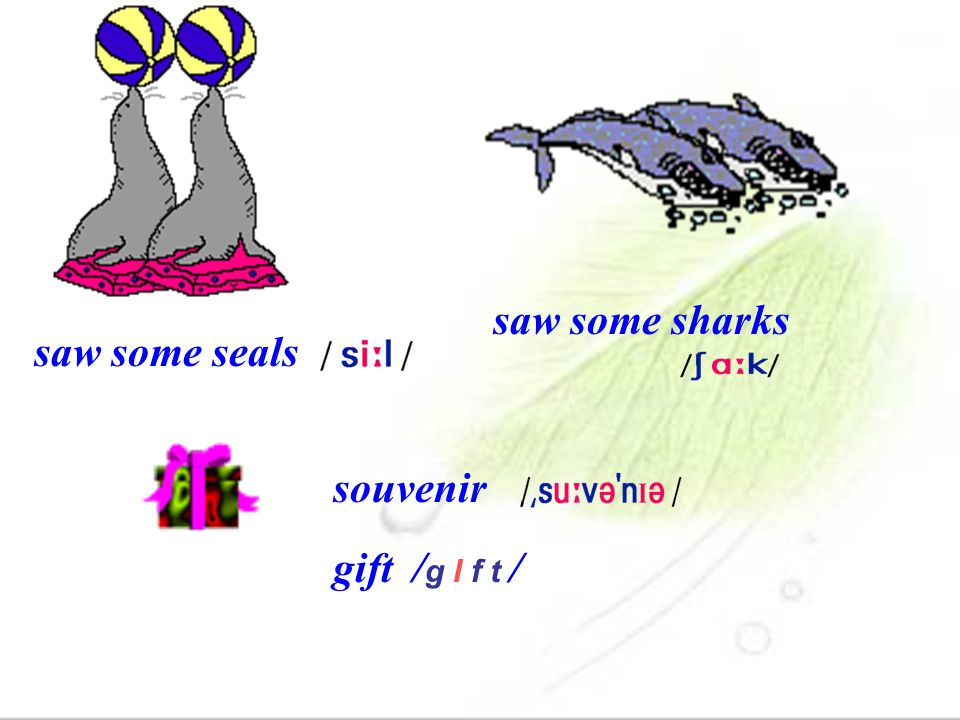 saw some sharks saw some seals souvenir gift /g I f t /