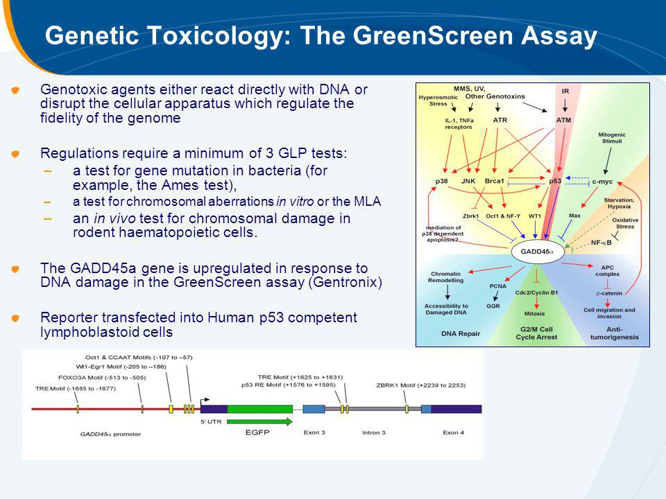 Genetic Toxicology: The GreenScreen Assay