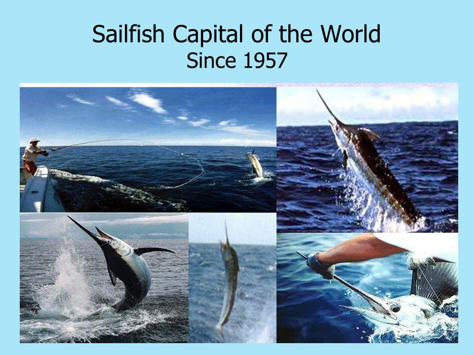 Sailfish Capital of the World Since 1957