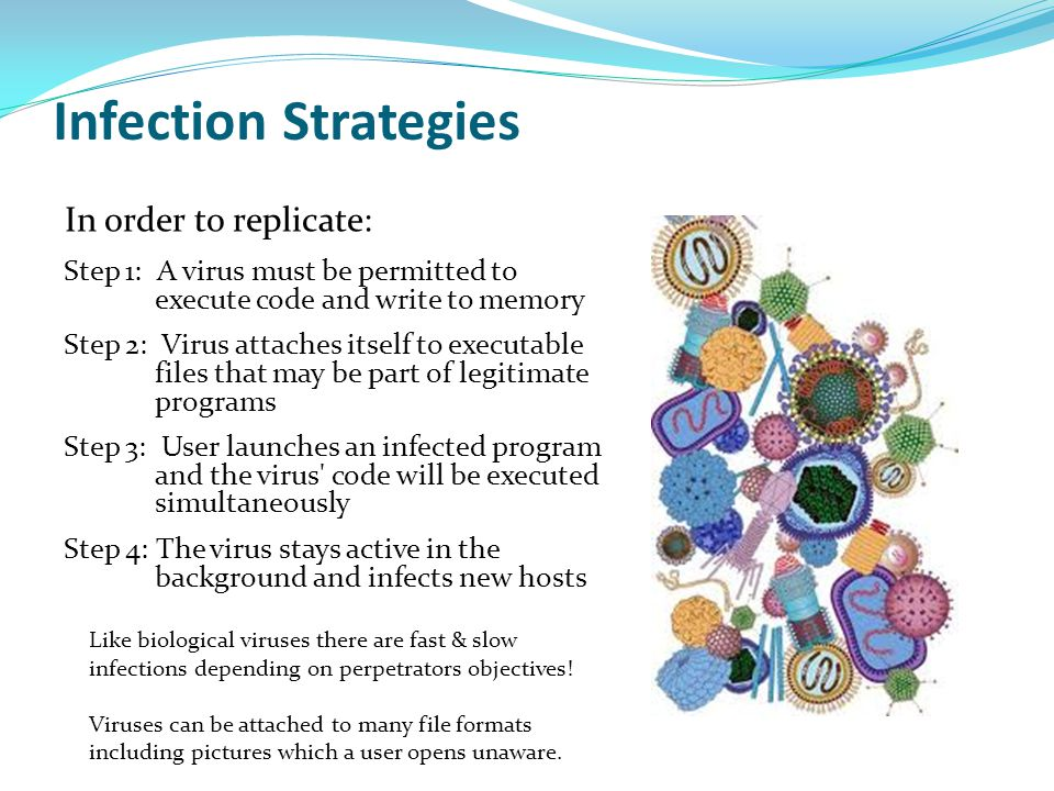 Infection Strategies In order to replicate: