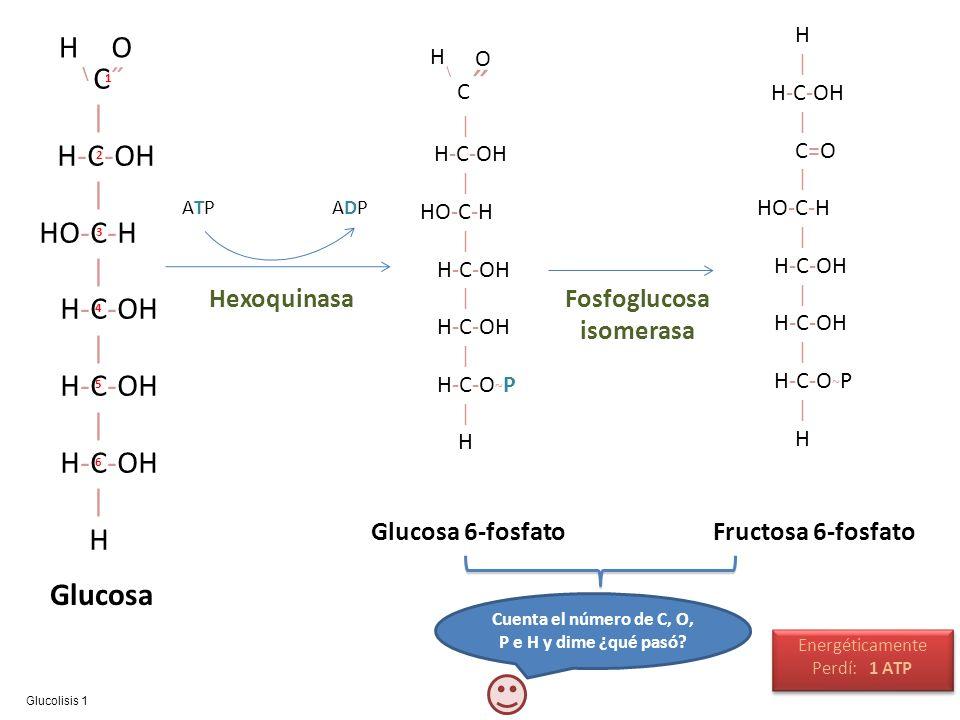 O C˝ | H-C-OH HO-C-H H Glucosa Fructosa 6-fosfato Glucosa 6-fosfato