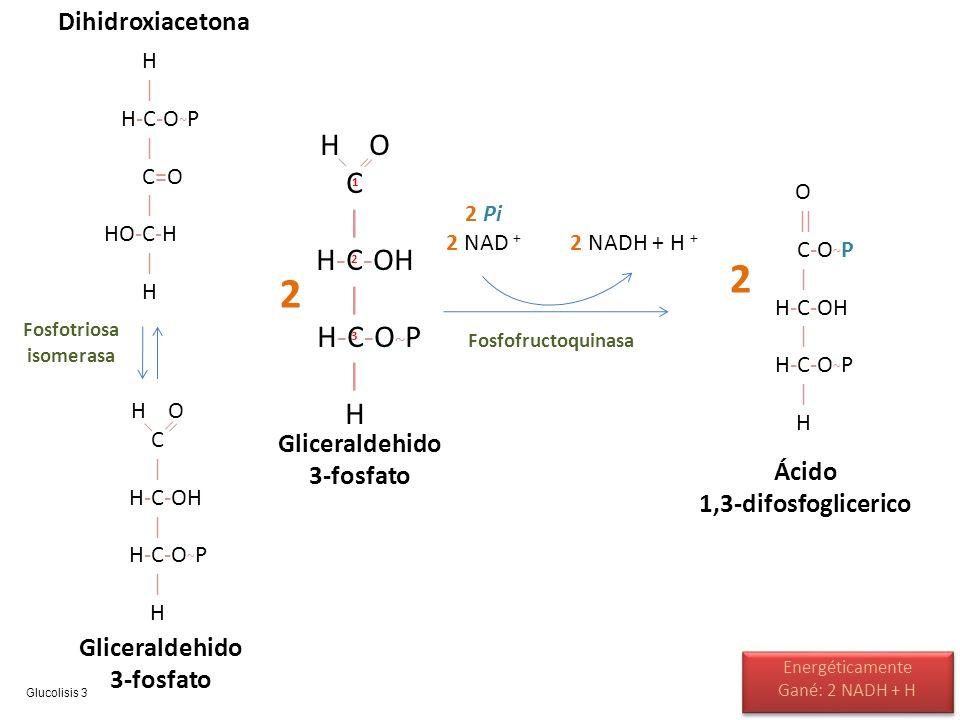 Fosfotriosa isomerasa