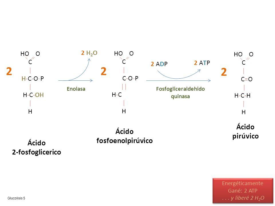 Fosfogliceraldehido quinasa