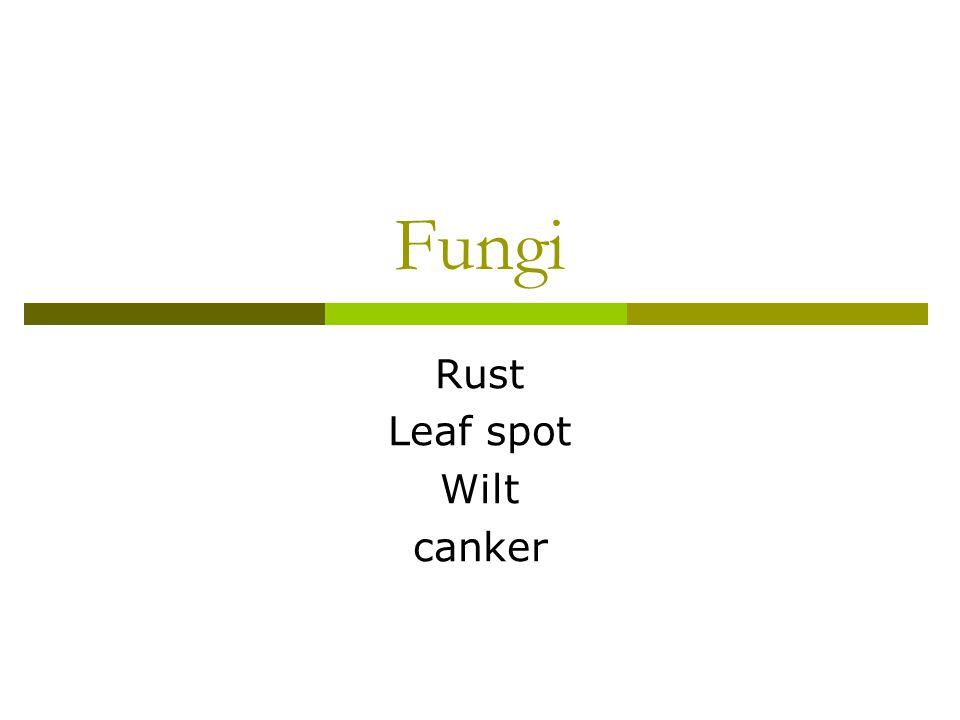 Rust Leaf spot Wilt canker