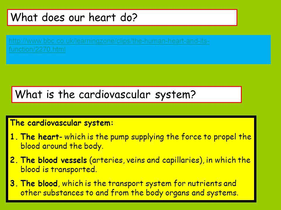 What is the cardiovascular system