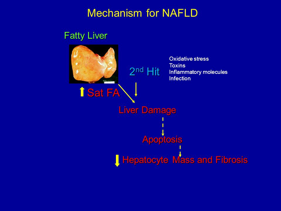 Mechanism for NAFLD 2nd Hit Sat FA Apoptosis Fatty Liver Liver Damage