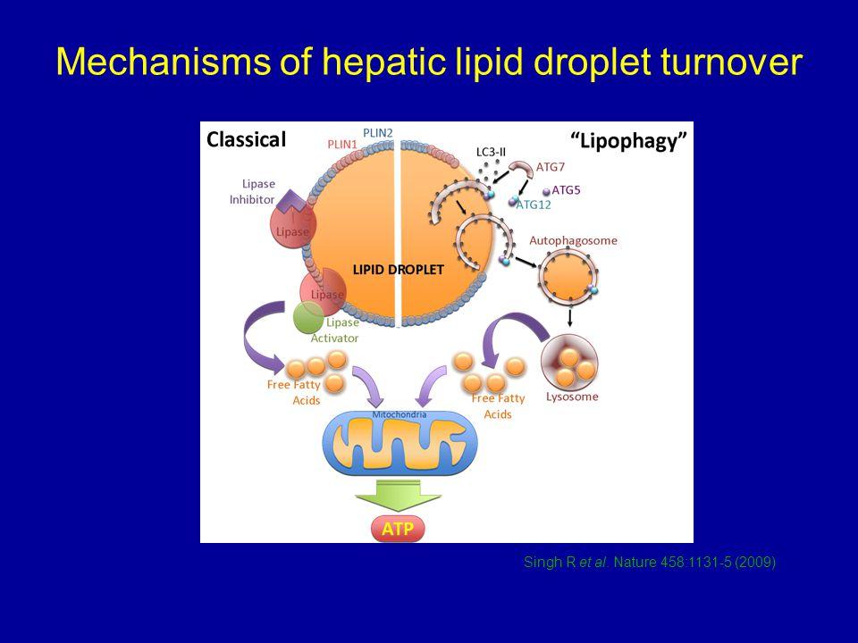Mechanisms of hepatic lipid droplet turnover