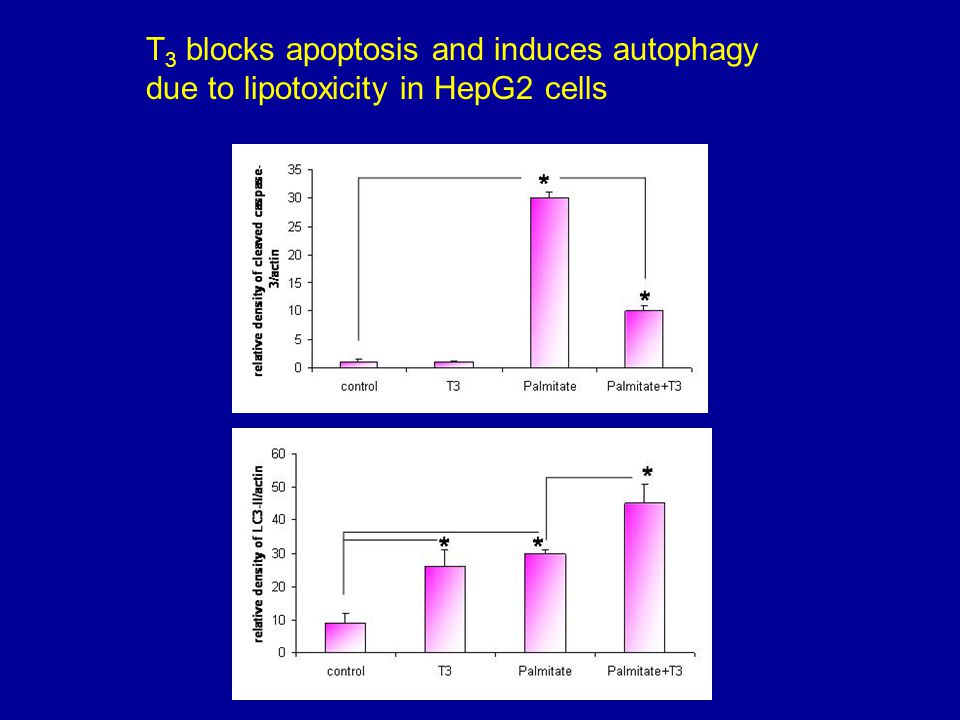 T3 blocks apoptosis and induces autophagy