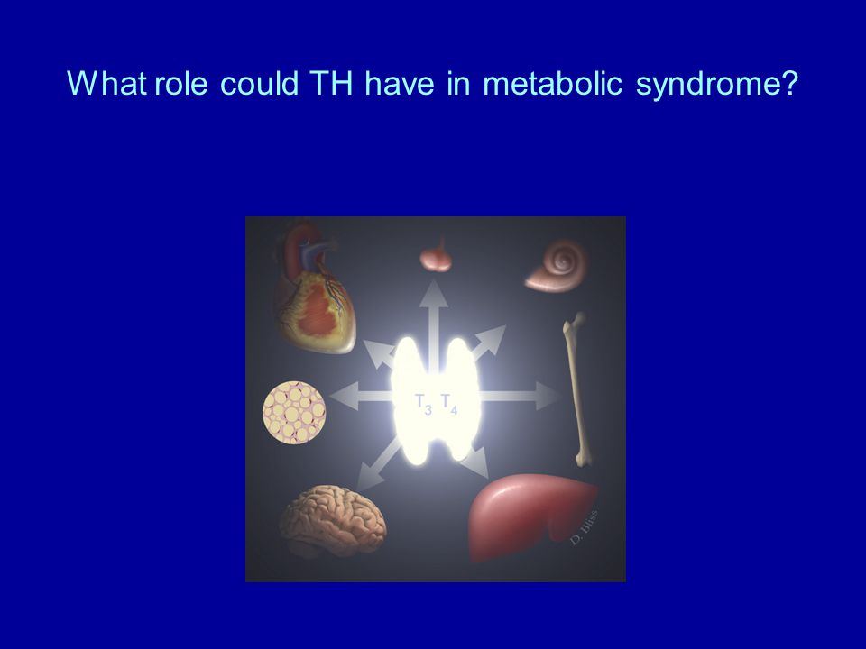 What role could TH have in metabolic syndrome
