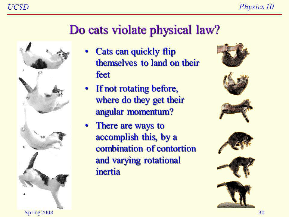Do cats violate physical law
