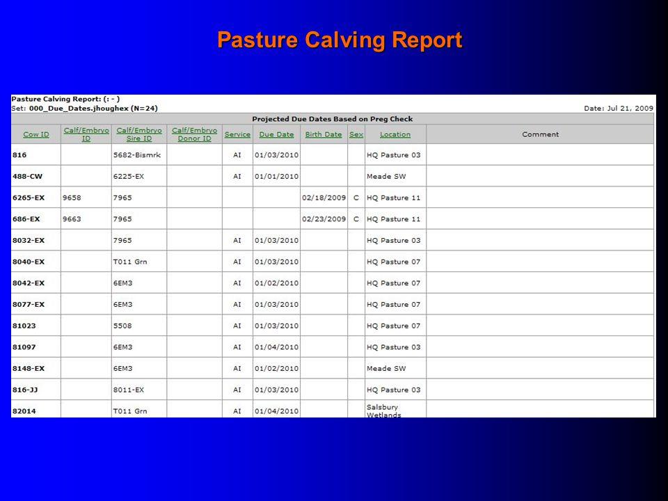 Pasture Calving Report