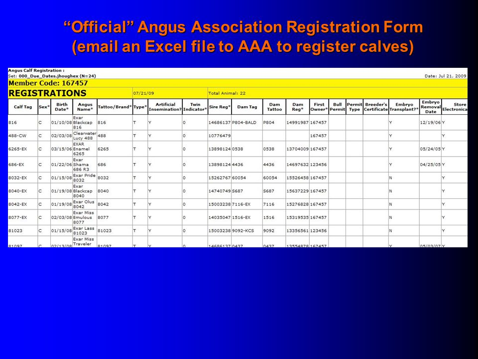Official Angus Association Registration Form (email an Excel file to AAA to register calves)