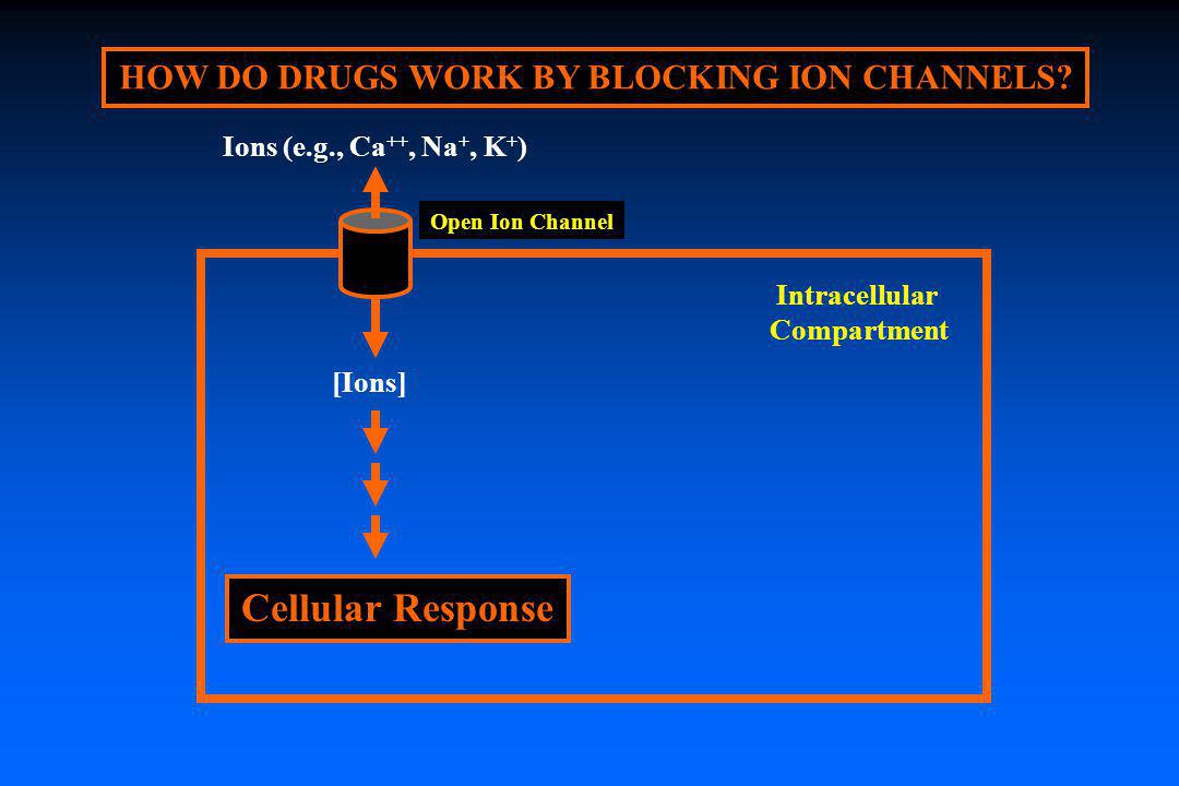 HOW DO DRUGS WORK BY BLOCKING ION CHANNELS