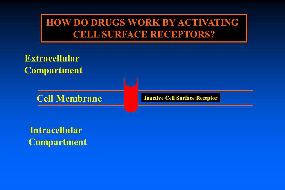HOW DO DRUGS WORK BY ACTIVATING CELL SURFACE RECEPTORS