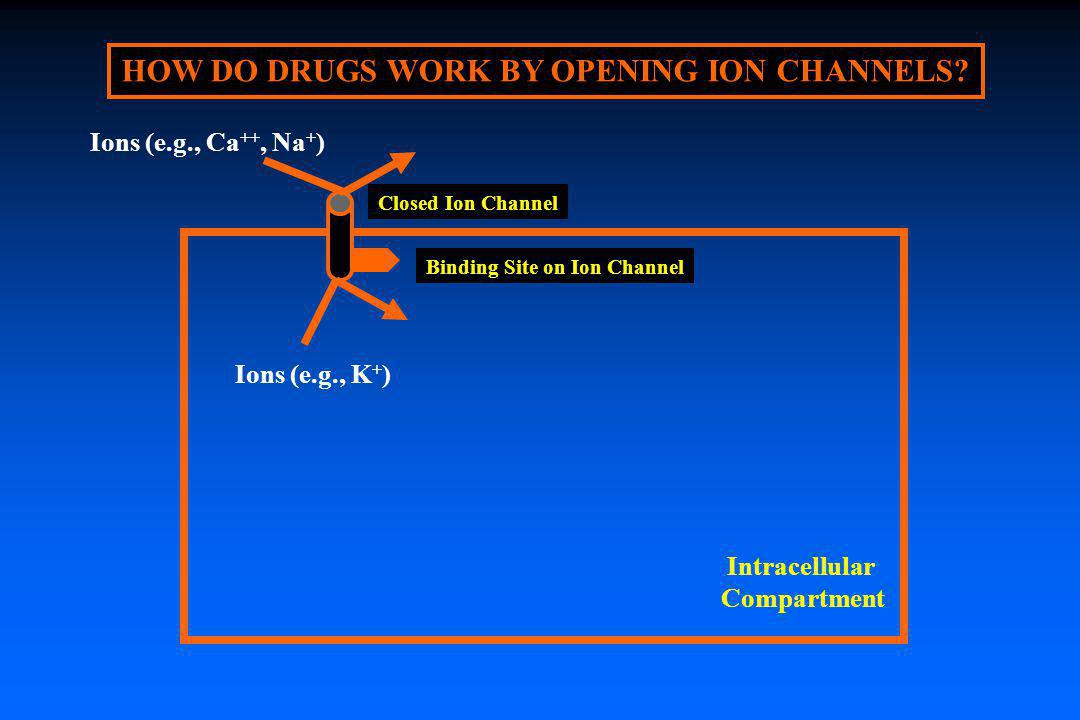 HOW DO DRUGS WORK BY OPENING ION CHANNELS Binding Site on Ion Channel