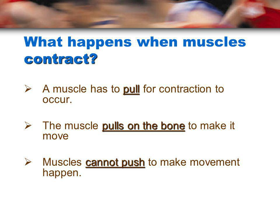 What happens when muscles contract
