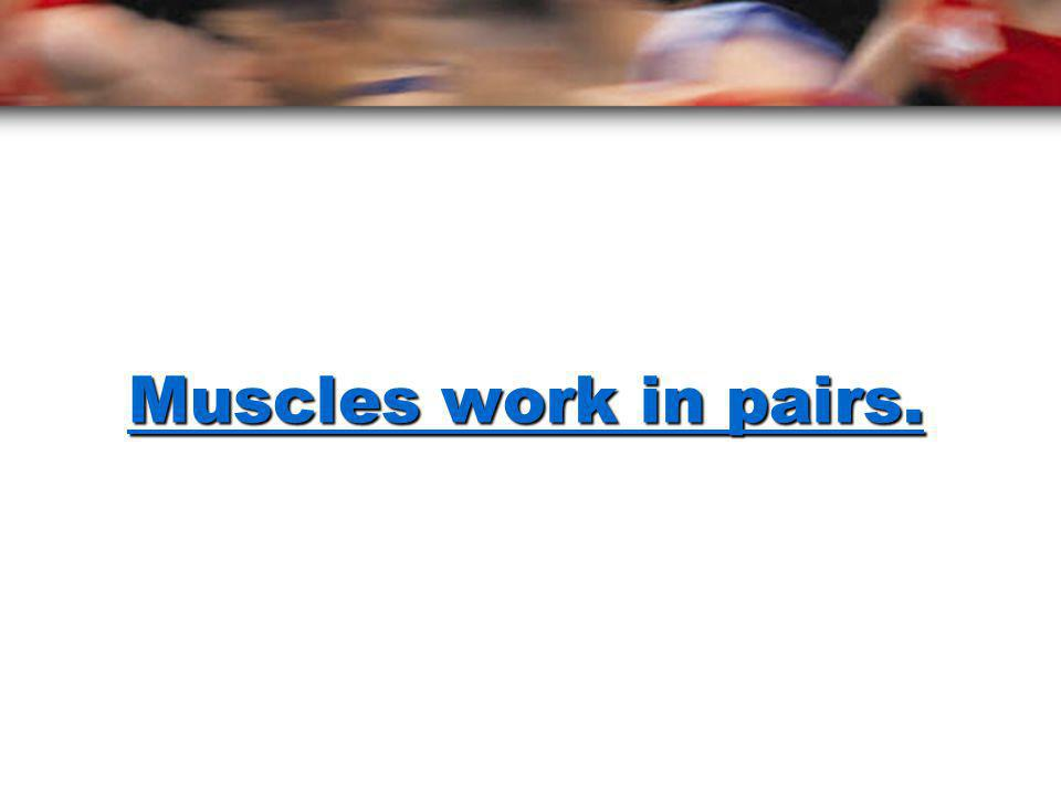 Muscles work in pairs.