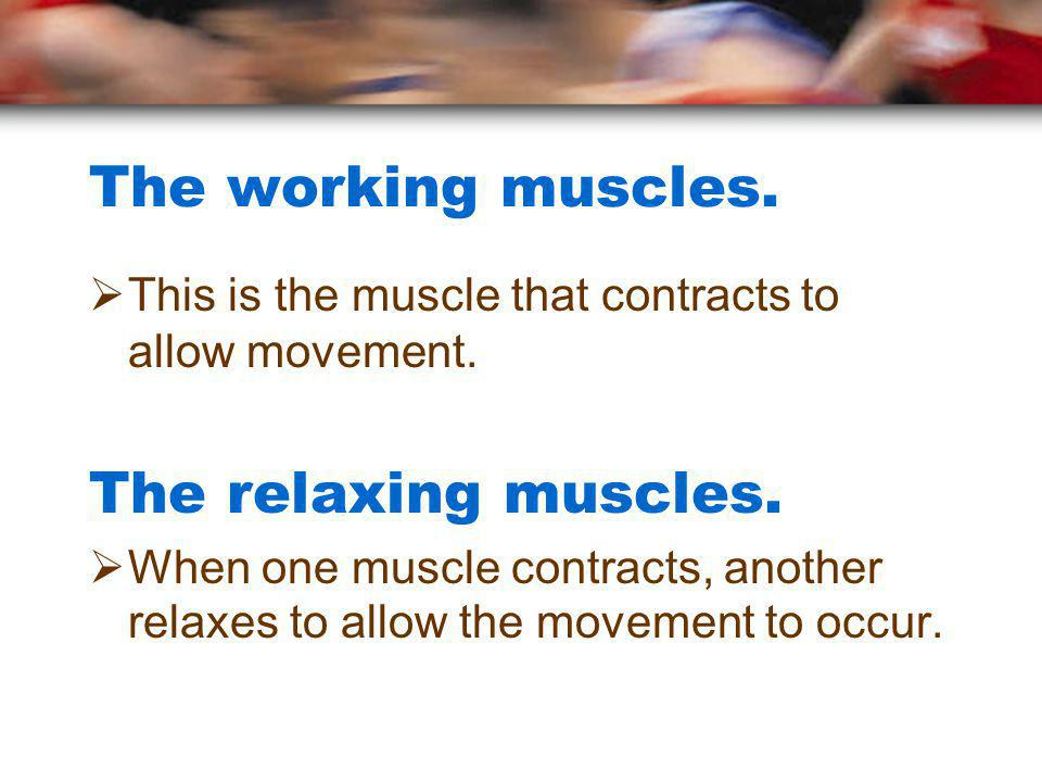 The working muscles. The relaxing muscles.