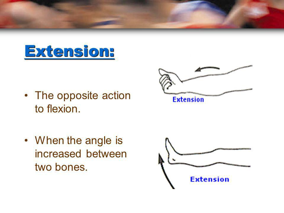 Extension: The opposite action to flexion.