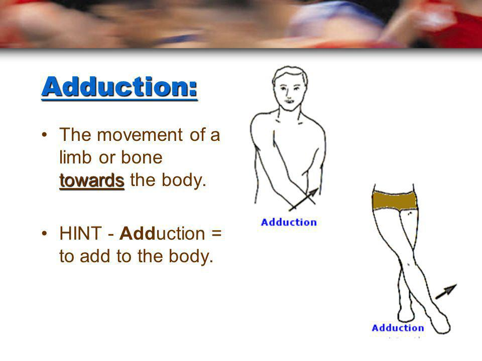 Adduction: The movement of a limb or bone towards the body.