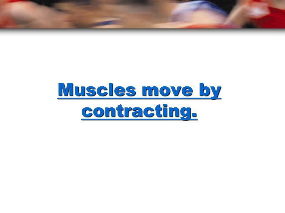 Muscles move by contracting.