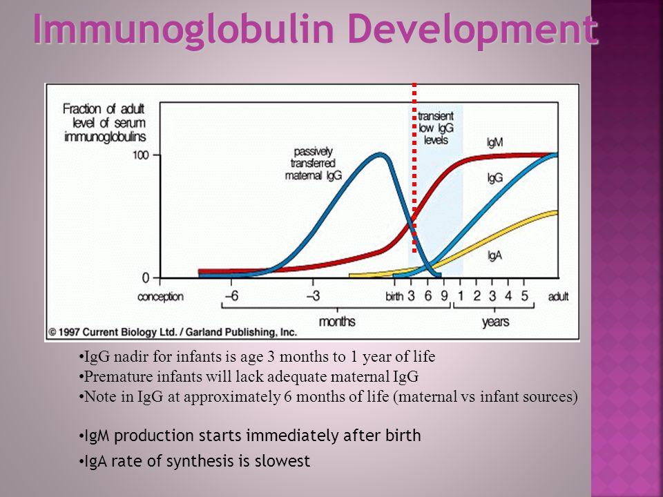 Immunoglobulin Development
