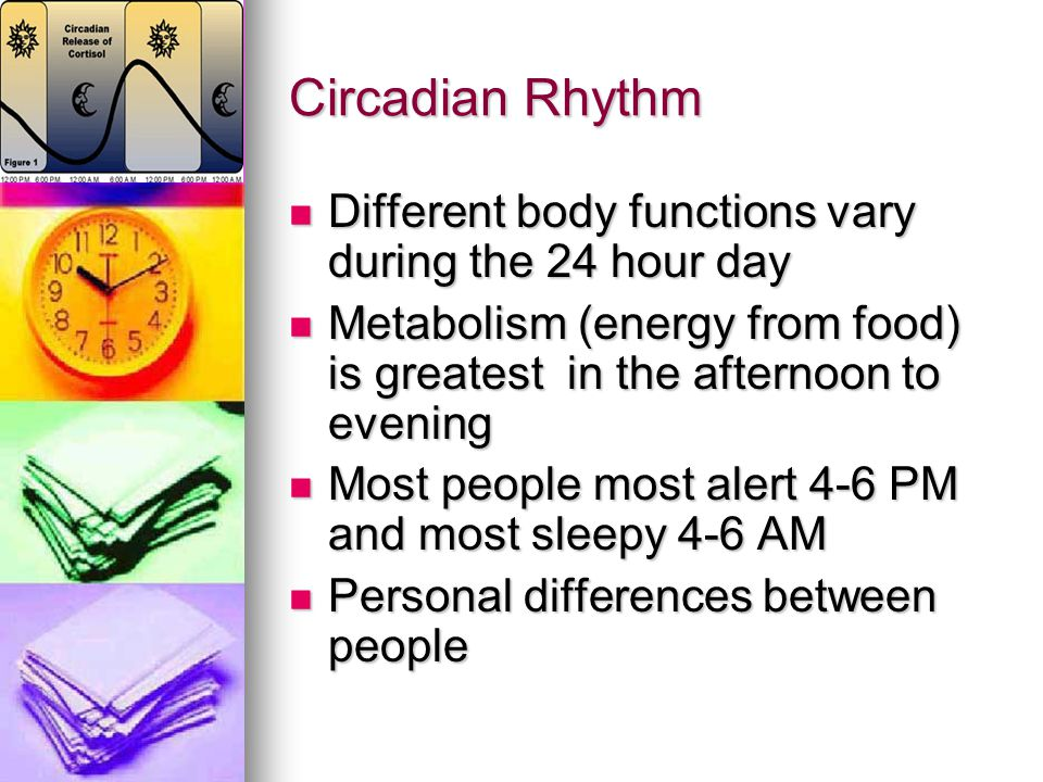 Circadian Rhythm Different body functions vary during the 24 hour day
