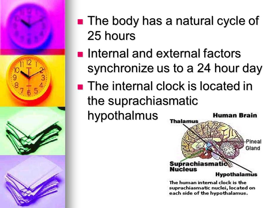 The body has a natural cycle of 25 hours