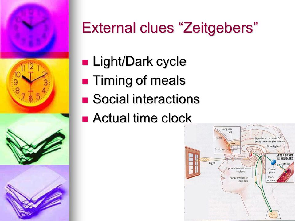 External clues Zeitgebers